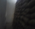 buccs telhara wh no 5