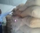 Buccs murtizapur wn  no 4A